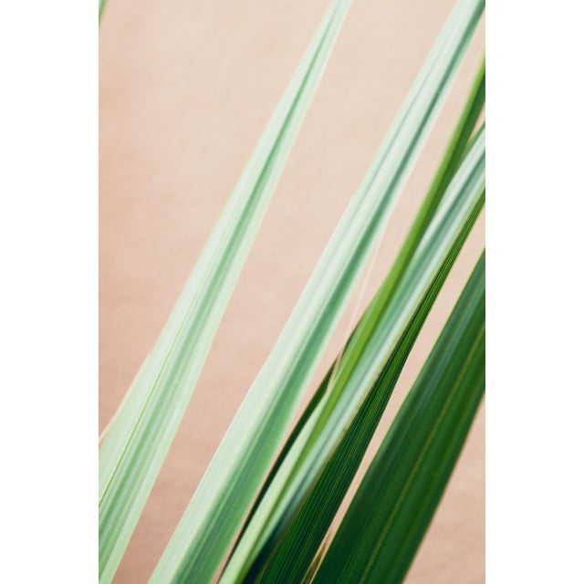 """Image of Kaitie Bryant """"Pink Palms"""" Photography"""