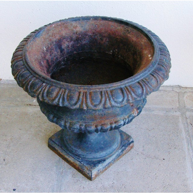 Image of Early 19th-C. Cast Iron Urn Planters - Pair