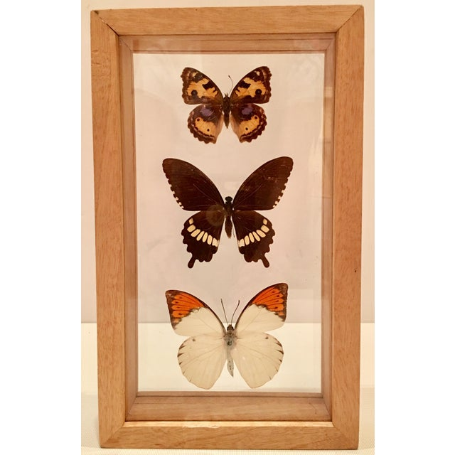 Shadow Box Framed Butterflies - A Pair - Image 4 of 7
