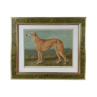Antique Greyhound Chromolithograph, 1891