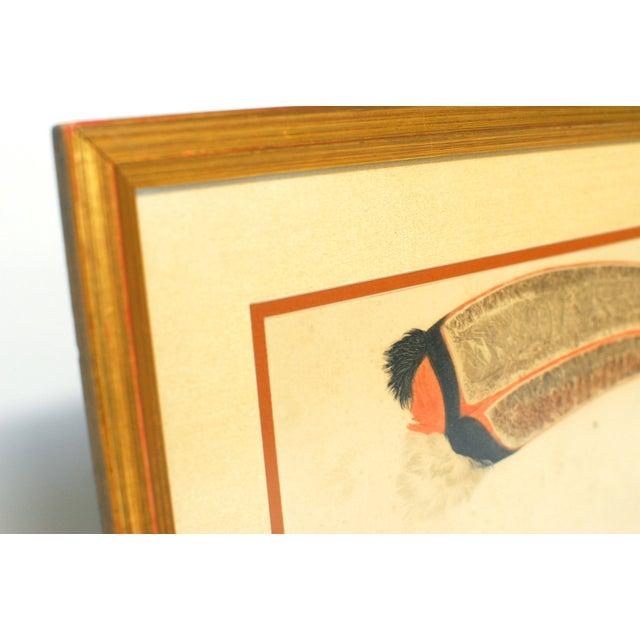 Image of J. Gould Anatomy Prints - a Pair