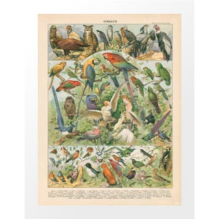 Vintage Parrots & Friends Archival Print