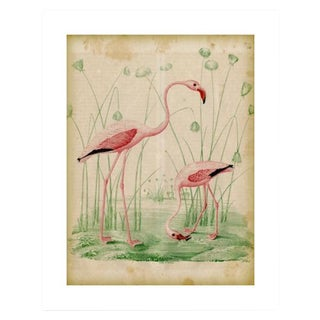 Antique '2 Flamingos' Archival Print