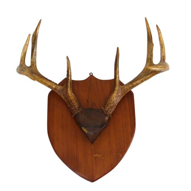 Mounted Deer Antlers - Image 1 of 4