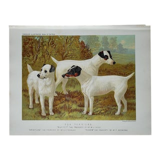 Antique Dog Fox Terriers Lithograph