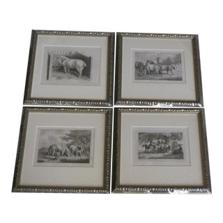 Antique Horse Engravings - Set of 4