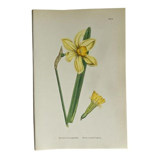1873 Antique Botanical Print