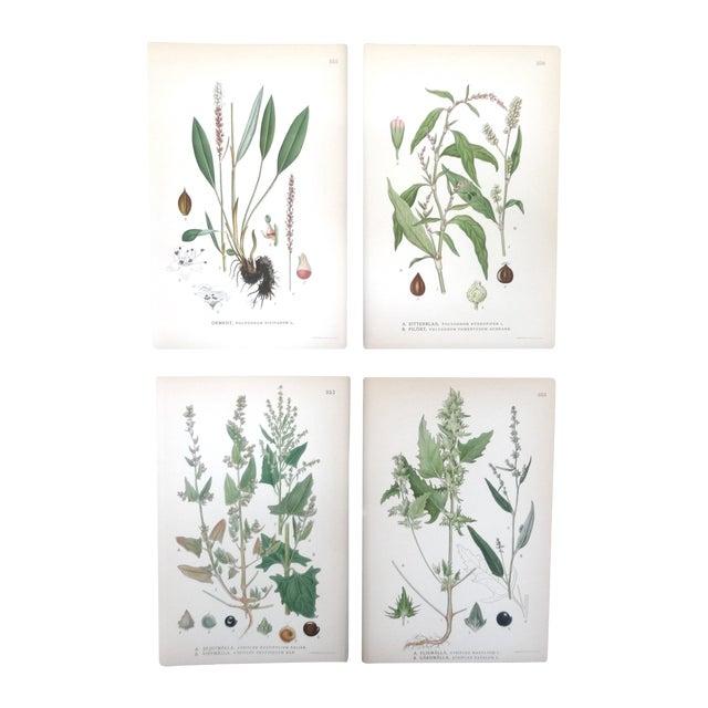 Swedish Floral Prints - Set of 4 - Image 1 of 6