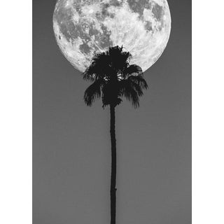 Palm Springs Moon and Palm Tree by Jason Mageau