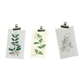 Antique Original 1800s Botanical Prints - Set of 3