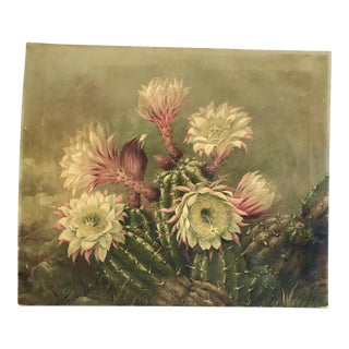 "1920 Blooming Cactus Oil on Canvas by ""A. Thomas"""