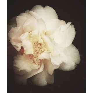 "Ashley Woodson Bailey ""Dream"" Photograph"