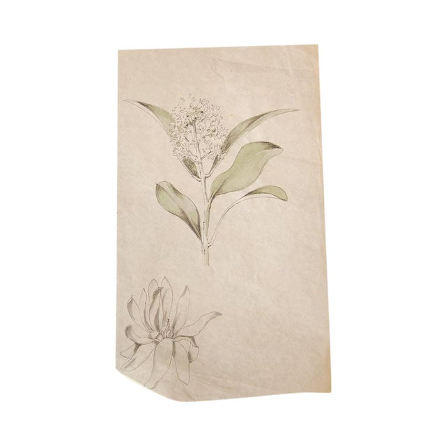 Image of Antique Dainty Flower Watercolor Drawing