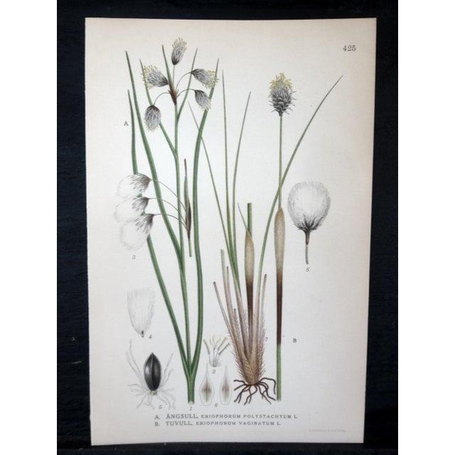 Swedish Floral Prints, Set of 4 - Image 3 of 6