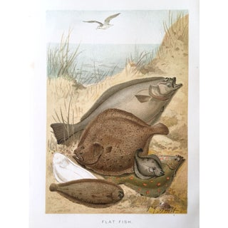 Antique Flat Fish Lithograph