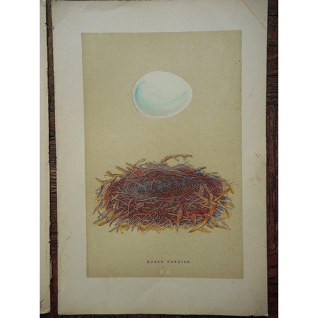 Antique Morris Nest & Egg Prints - Set of 4 - Image 6 of 6