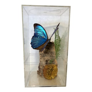 Vintage Blue Morpho Butterfly in Lucite Box