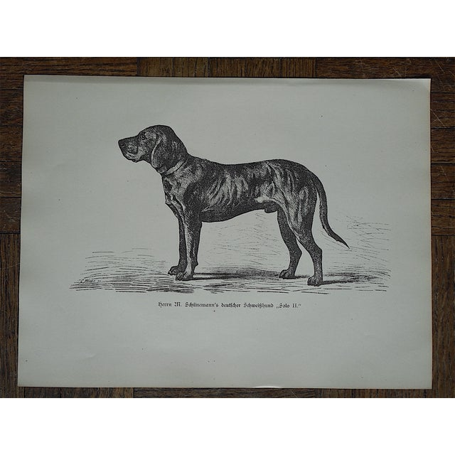 Antique Hunting Dog Engravings - A Pair - Image 4 of 4