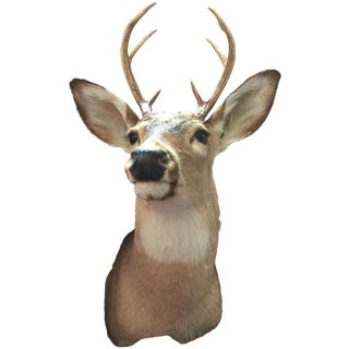 Mounted Taxidermy Deer