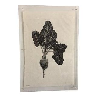 "Lucite Framed ""Red Beet"" Print"