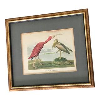 Vintage Scarlet Ibis Print