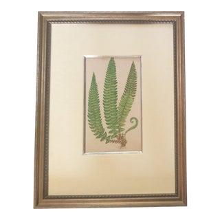 Framed English Fern Print