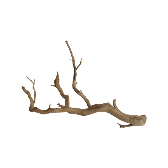 Preserved Driftwood Branch - Image 1 of 5