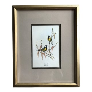'Great Tit' Audubon Print by John Gould