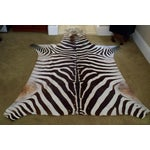 Image of African Burchell Zebra Skin Rug - 5′10″ × 8′9″