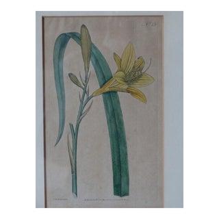 English Curtic Botanical Print