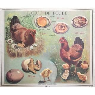 Vintage French Hen & Egg Poster