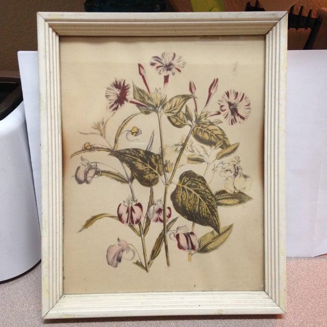 Vintage Botanical Painting - Image 2 of 5