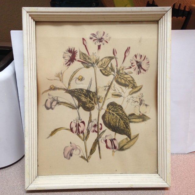 Image of Vintage Botanical Painting