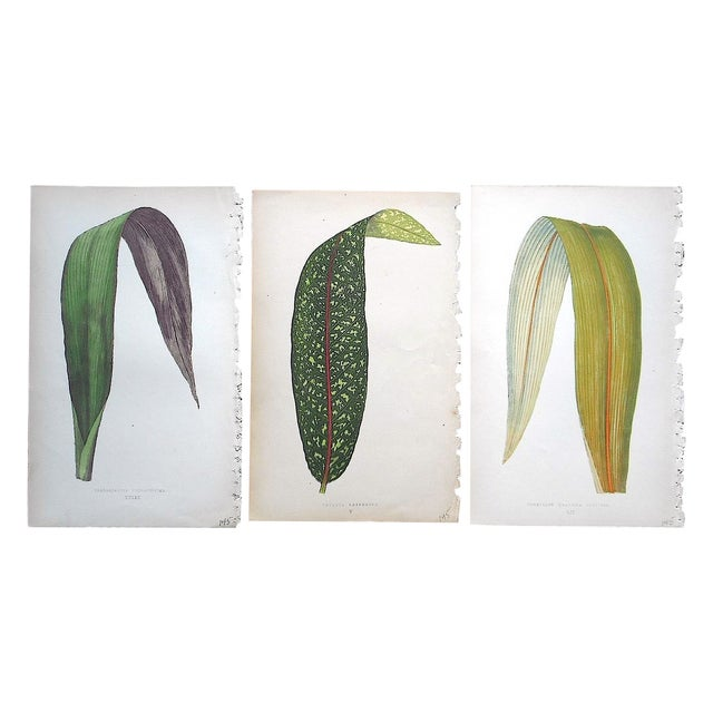Image of 3 Antique Ornamental Leaves Lithographs