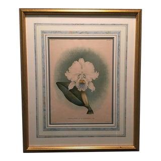 Antique Framed Botanical Orchid Print