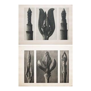 Karl Blossfeldt Double Sided Photogravure N7-8