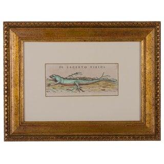"Conrad Gessner ""Green Lizard"" Woodcut c.1550s"