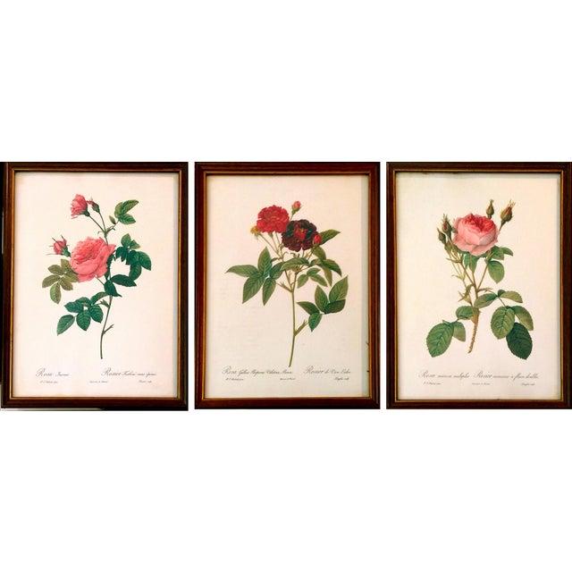 Original Pierre Redouté Botanical Prints - S/3 - Image 1 of 8