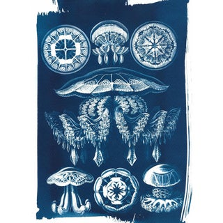 Jellyfish Anatomical Drawing by Ernst Haeckel, Cyanotype Print