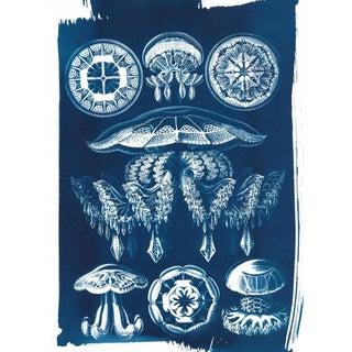 Jellyfish Anatomical Drawing by Ernst Haeckel, Cyanotype Print