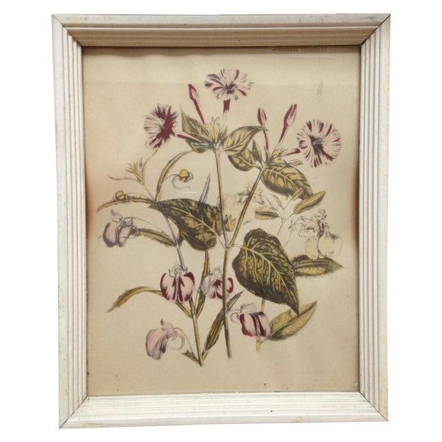 Vintage Botanical Painting - Image 1 of 5
