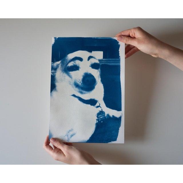 Image of Cyanotype Print- Dog With Eyebrows Meme