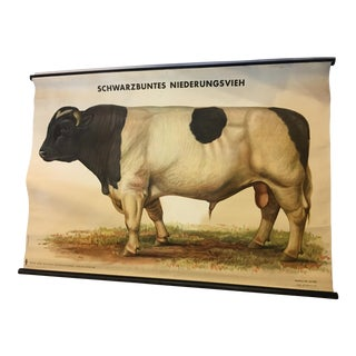 1920 German Bull Lithograph on Canvas