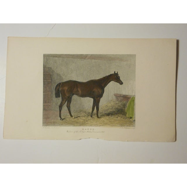 Image of Antique Hand Colored Horse/Equine Engraving