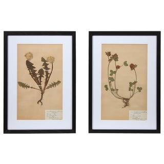 Framed Herbarium Ii - A Pair