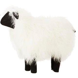 Large Tibetan Lamb Sheep in White