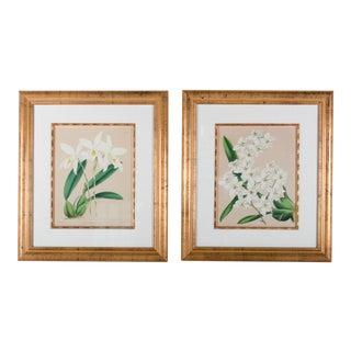Framed B.S. Williams Botanical Engravings - A Pair