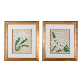 Framed B.S. Williams Botanical Engravings - A Pair