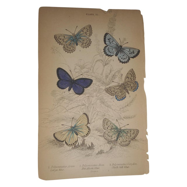 19th C. Hand Colored Engraving Butterflies - Image 1 of 3