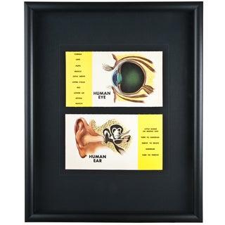 Framed Vintage Eye and Ear Flash Cards